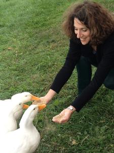 Ducks-sm